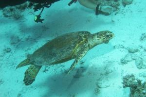 Schildkröten (Testudines)